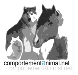 logo comportement animal net web
